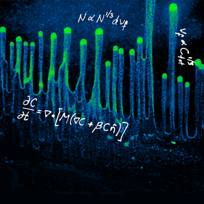"The image shows cyanobacterial cells on a moist surface, moving towards a directed light source. This phototactic behavior results in striking and regularly ordered ""fingers"" of cell groups. We model this behavior as a biased random walk, which, in combination with cell-mediated surface modification, recapitulates many experimentally observed features. By tuning cellular concentration and light intensity, we show that this behavior follows robust scaling laws and only emerges under certain condi"